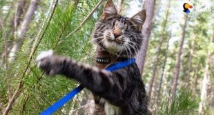 Blind Kitten Grows Up To Be An Explorer – NINA | The Dodo