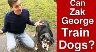 Can Zak George ACTUALLY Train Dogs?