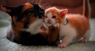 Cute Loving Cats 😻😊 Sweet Loving Cats (Full) [Funny Pets]