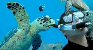 Did you know that TURTLES & TORTOISES can make you CRY FROM LAUGHING TOO HARD? – FUNNIEST VIDEOS