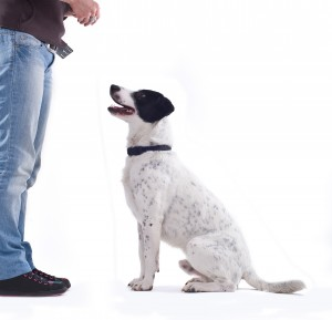 How Dog Training Techniques Have Changed and Need to Change Back