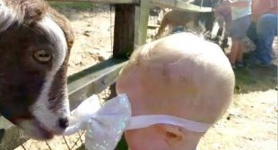 KIDS & BABIES meet ANIMALS, the FUNNIEST MOMENTS EVER! – A real LAUGH BOMB!