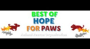 LIVE STREAM – Hope For Paws Animal Rescue + a NEW video coming up ;-)