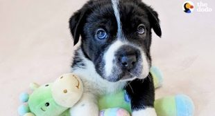 Rescue Pup Doesn't Look Like Any Other Dog – BIGHEAD | The Dodo