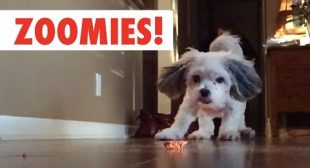 Zoomies! | The Fastest Pet Compilation of the Year