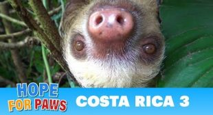 Hope For Paws in Costa Rica – rescues and super special animals! Please share.