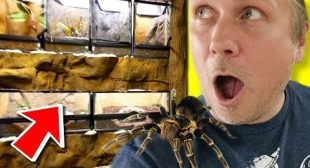 INSANE DIY TARANTULA CAGE BUILDS on a BUDGET!! | BRIAN BARCZYK