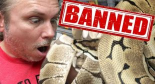 VERY UPSET!! THEY OUTLAWED THIS SNAKE!!! | BRIAN BARCZYK