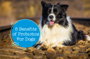 5 Key Benefits of Probiotics For Dogs