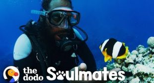 Clownfish Named Nemo Has 10-Year Friendship With This Diver | The Dodo Soulmates
