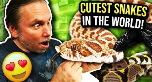 CUTEST SNAKES IN THE WORLD!! | BRIAN BARCZYK
