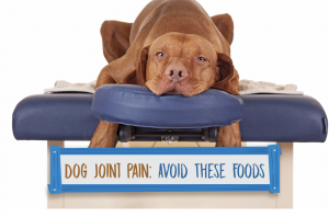 Dog Joint Pain: Avoid These Foods!