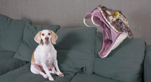 Dogs vs Giant Snake! Funny Dogs Maymo, Potpie & Penny