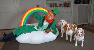 Dogs vs Leprechaun Prank: Funny Dogs Maymo, Penny, & Potpie