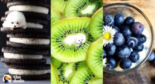 Find the Dogs Hidden in These Pictures of Food Challenge | The Dodo