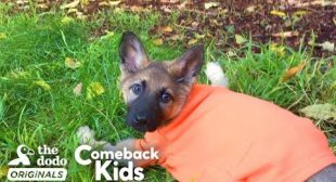 German Shepherd Puppy With Swimmer's Syndrome Teaches Herself To Run | The Dodo Comeback Kids
