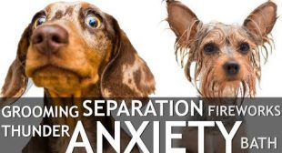 How To Help Your Dog's Anxiety: Separation Anxiety, Bath Anxiety, Grooming Anxiety, Thunder…