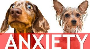 How To Help Your Dog's Anxiety With These Products (Separation Anxiety, Bath Anxiety…)