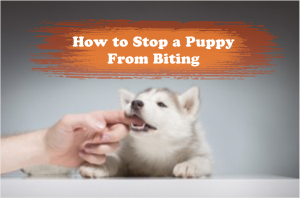 How To Stop a Puppy From Biting