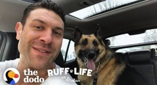Lee Adopts 3 Dogs In 1 Day! | Ruff Life With Lee Asher
