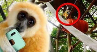 MONKEY STEALS PHONE AND CLIMBS 40 FEET UP!! | BRIAN BARCZYK