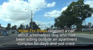 NEW Hope For Paws app on the App Store & Google Play.