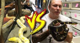 REPTILE ZOO vs BHB Reptiles!! Pros and Cons!!! | BRIAN BARCZYK