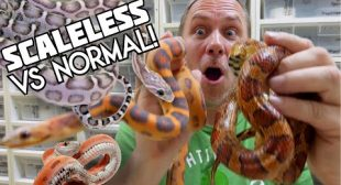 SCALELESS SNAKES!! WOW!! | BRIAN BARCZYK