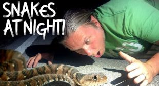 SNAKE HUNTING AT NIGHT!! LOOK WHAT WE CAUGHT!!! | BRIAN BARCZYK
