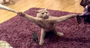 Wanna LAUGH HARD right NOW? – Watch these EXTREMELY FUNNY ANIMAL VIDEOS