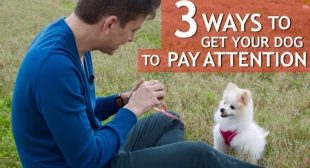 3 Ways to Get your Dog to Pay Attention! (Sit, Look and Play)