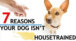 7 Reasons You're Having Trouble Housetraining Your Dog! (PLUS the BEST Pee Pads)
