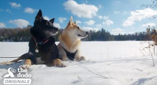 Dog Nobody Wanted Gets The Perfect Adventure Family   The Dodo Destination: Firsts