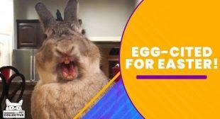 Get EGGcited For Easter!!!