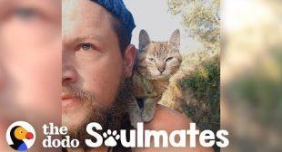 Guy Biking Across the World Picks Up a Stray Kitty | The Dodo Soulmates