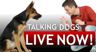 LET'S TALK DOGS!
