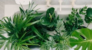 Should You Ever Be Watering Your Houseplants In The Bath? A Pro Weighs In
