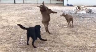The FUNNIEST ANIMALS, you'll LAUGH ALL DAY! – BEST of 2019