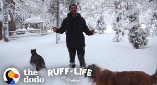 The Pack Moves Into A New House During A Blizzard | Ruff Life With Lee Asher