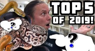 TOP 5 SNAKE BREEDING PROJECTS OF 2019!! | BRIAN BARCZYK