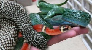 YOU WONT BELIEVE THE SNAKES. BREEDING THIS YEAR!! | BRIAN BARCZYK