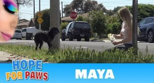 Abandoned dog didn't trust us, but then her guardian angel showed up!