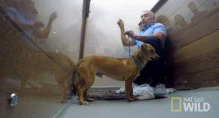 "Cesar Millan's Dog Nation: Los Angeles ""Brutus"""