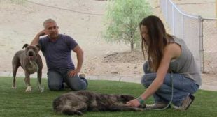 """Cesar Millan's Dog Nation: Los Angeles """"For The Love Of Dogs"""""""