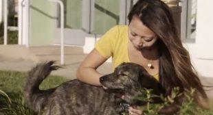 "Cesar Millan's Dog Nation: Los Angeles ""Luke"""