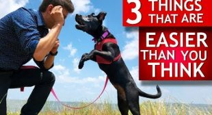 3 Easy Things to Teach Any Dog That Most People Think Are Hard (Teeth brushing, let go of toys…)