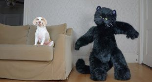 Giant Cat Rescues Dog from Mouse! Funny Dogs Maymo, Penny & Potpie