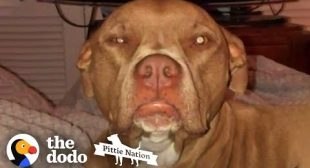 This Pittie Is SUCH A Daily Mood | The Dodo Pittie Nation