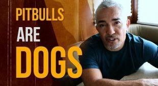 Why I Love Pit Bulls