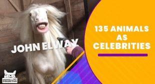 135 Animals As Celebrities